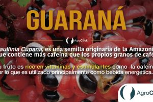 guarana,tips,agricultura,agroclick,agroteach,blog,