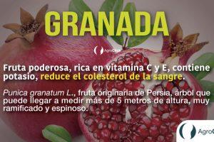 granada,agroteach,agroclick,blog agroteach